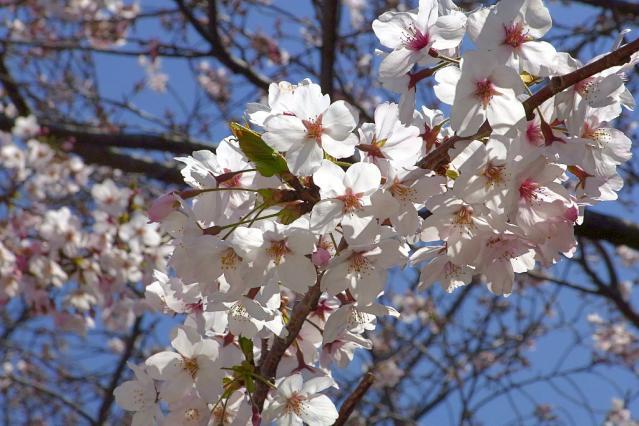11-Spring02.jpg