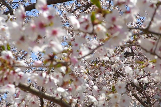 11-Spring03.jpg