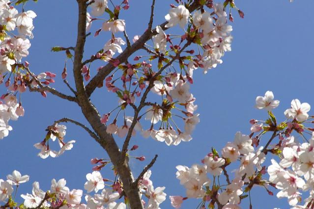 11-Spring04.jpg