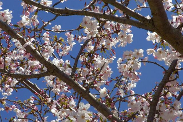 11-Spring05.jpg