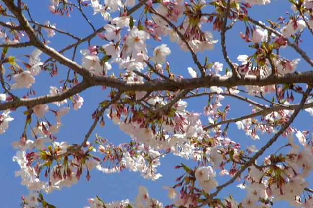 11-Spring06.jpg