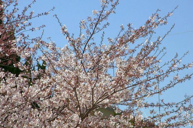 11-Spring07.jpg