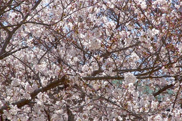 11-Spring08.jpg