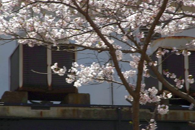 11-Spring09.jpg