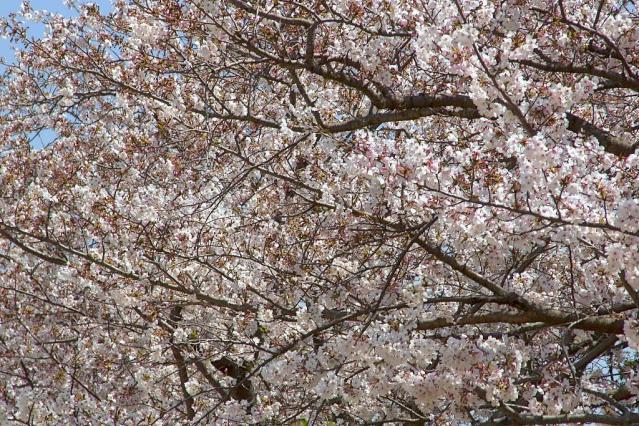 11-Spring10.jpg