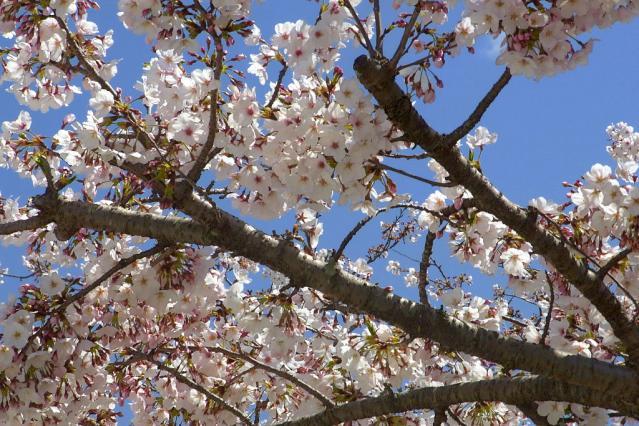 11-Spring12.jpg