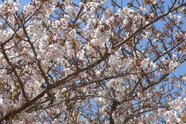 11-Spring13.jpg