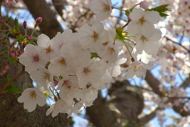 11-Spring14.jpg