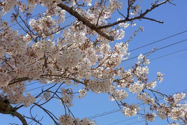 11-Spring15.jpg