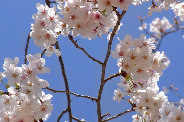 11-Spring16.jpg