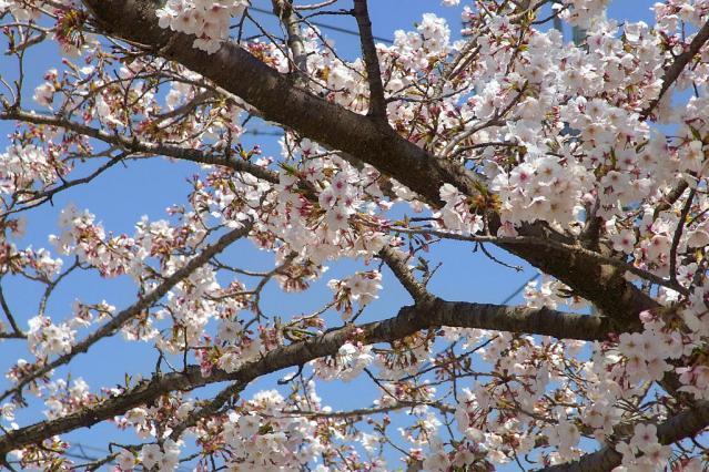11-Spring17.jpg