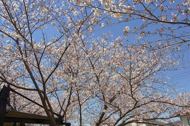 11-Spring18.jpg