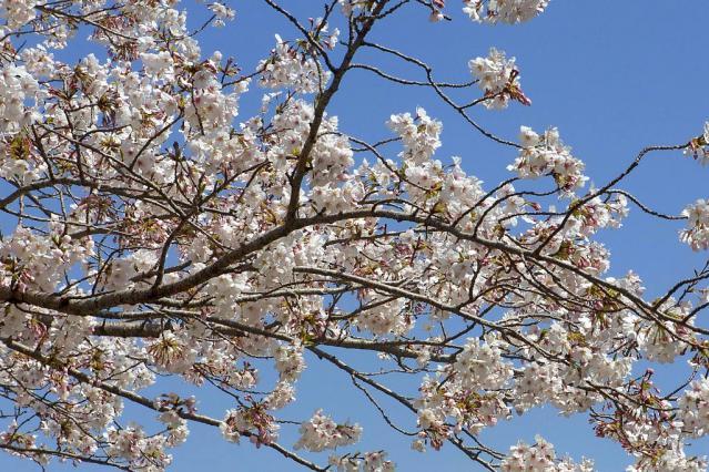 11-Spring19.jpg