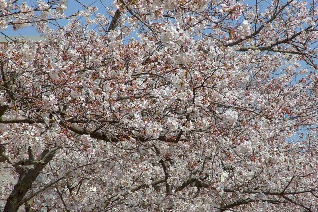 11-Spring20.jpg
