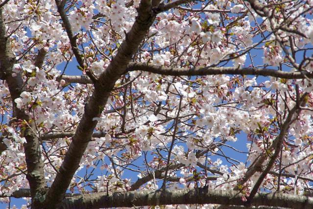 11-Spring21.jpg
