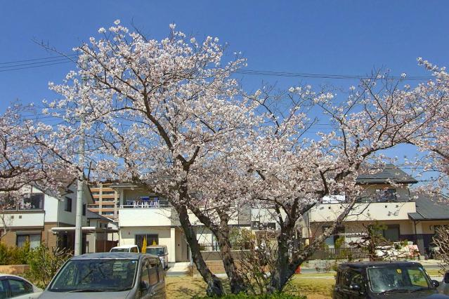 11-Spring22.jpg