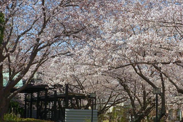 11-Spring24.jpg