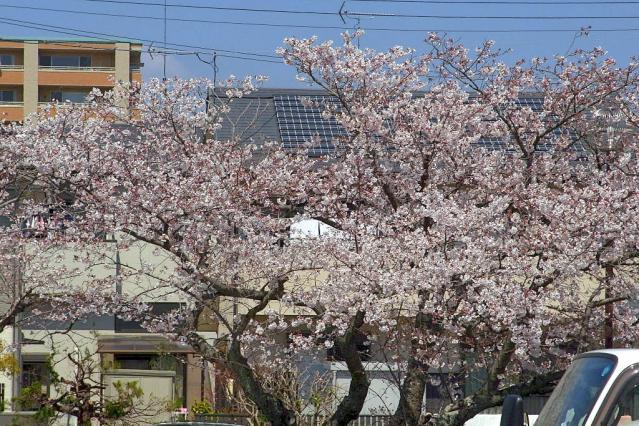 11-Spring25.jpg