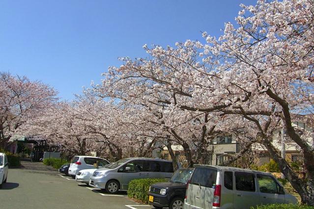11-Spring26.jpg