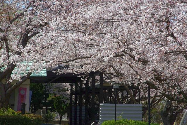 11-Spring27.jpg