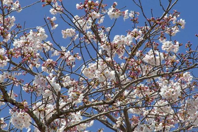 11-Spring28.jpg