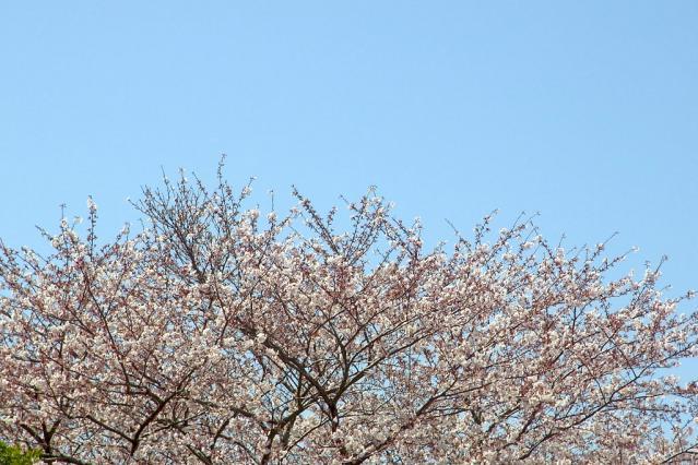 11-Spring29.jpg