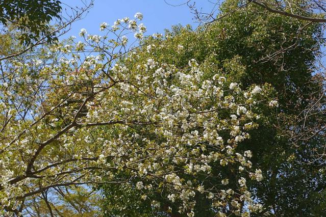 11-Spring30.jpg