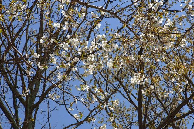 11-Spring31.jpg