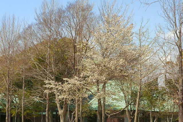11-Spring33.jpg
