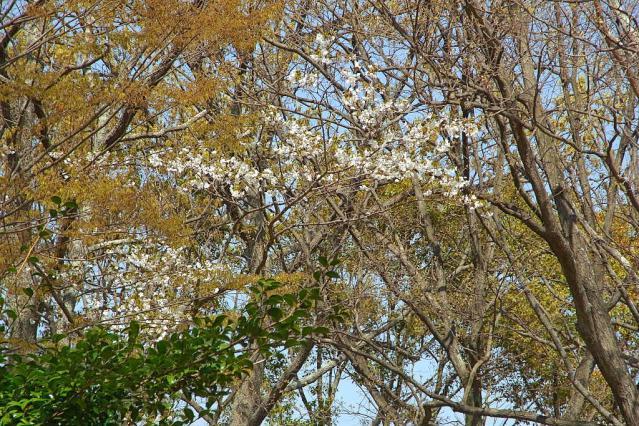11-Spring34.jpg