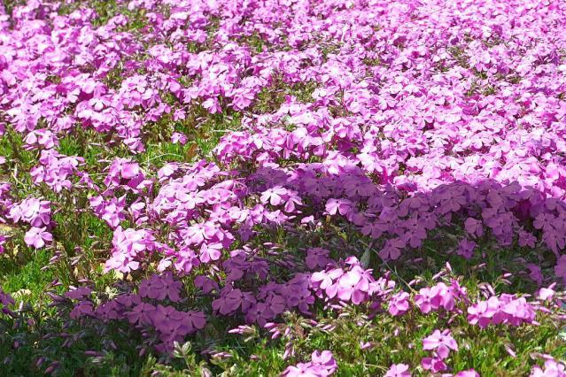 11-Spring37.jpg