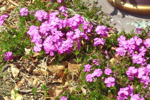 11-Spring38.jpg