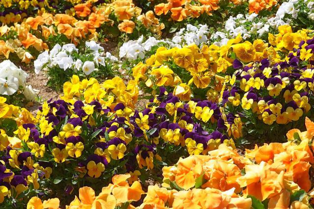 11-Spring39.jpg