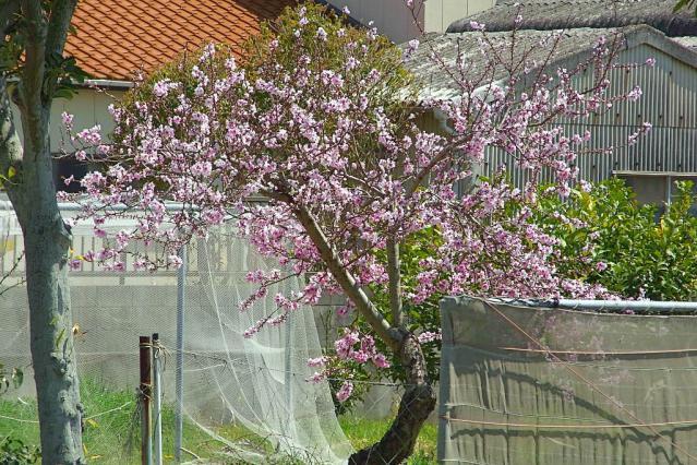 11-Spring40.jpg