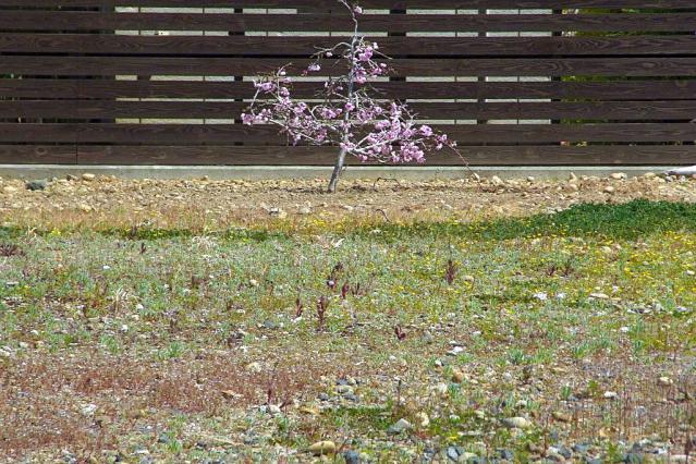 11-Spring44.jpg