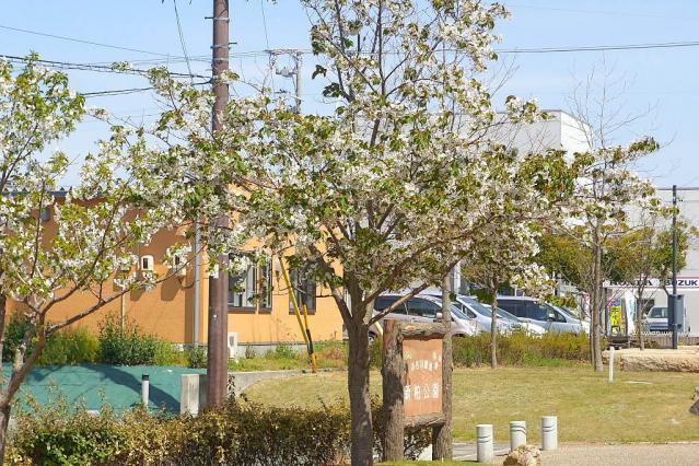 11-Spring45.jpg