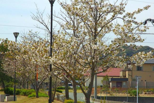 11-Spring48.jpg