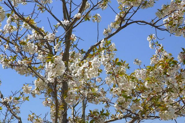 11-Spring49.jpg