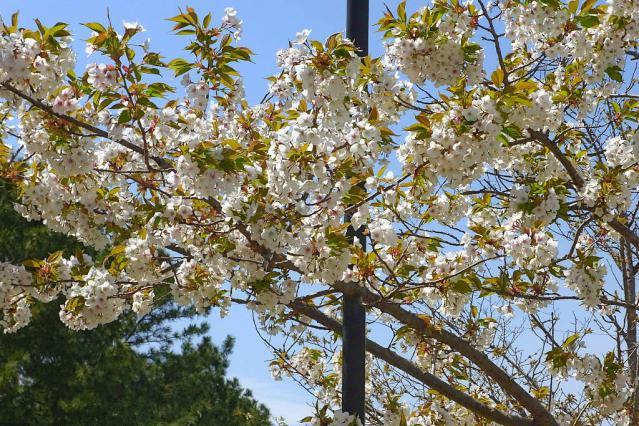 11-Spring50.jpg