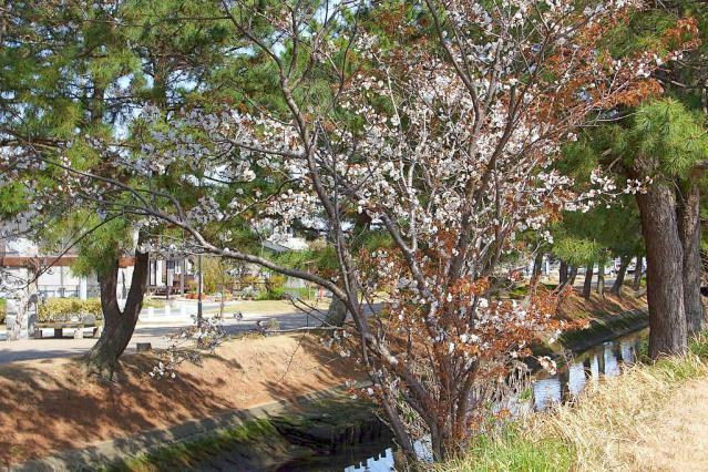 11-Spring51.jpg