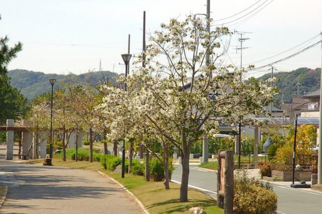 11-Spring54.jpg