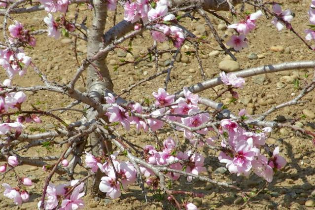 11-Spring59.jpg