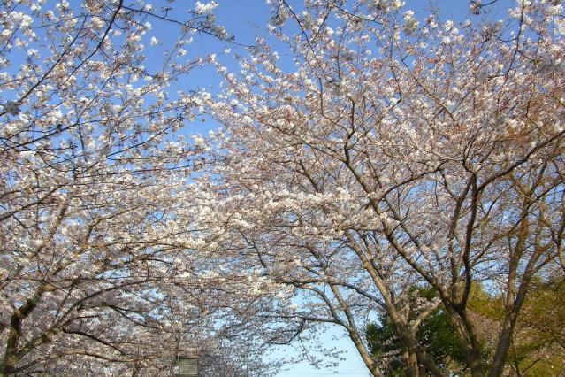 11-Spring60.jpg