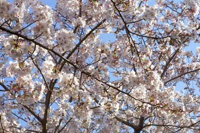 11-Spring61.jpg