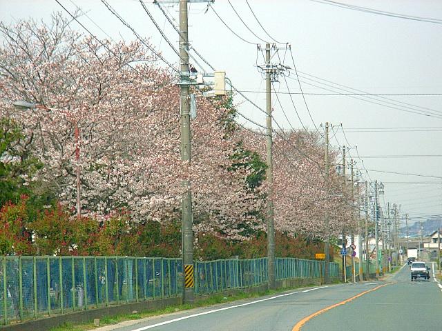 2006-Spring001.jpg