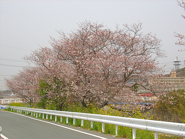 2006-Spring002.jpg