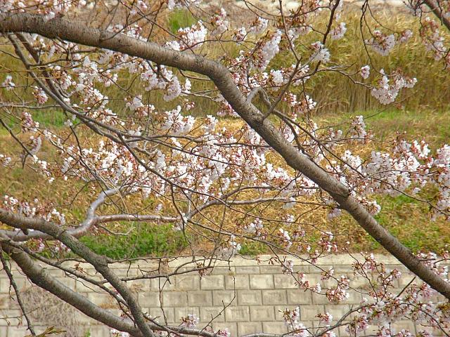 2006-Spring003.jpg