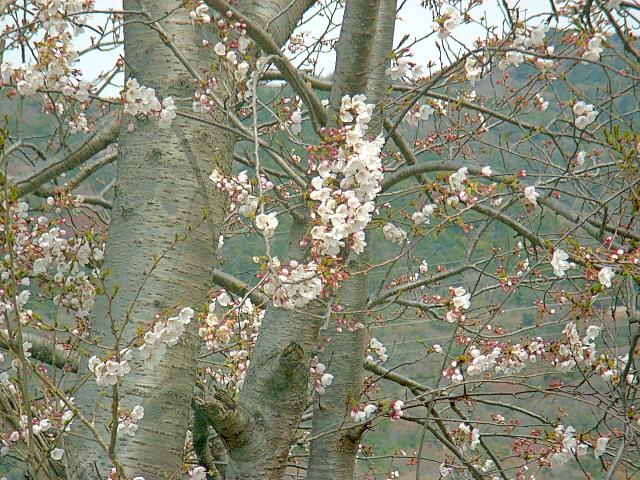 2006-Spring004.jpg