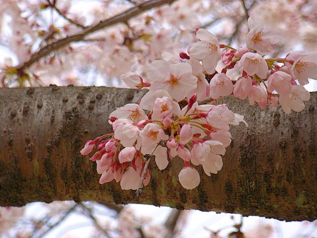 2006-Spring005.jpg