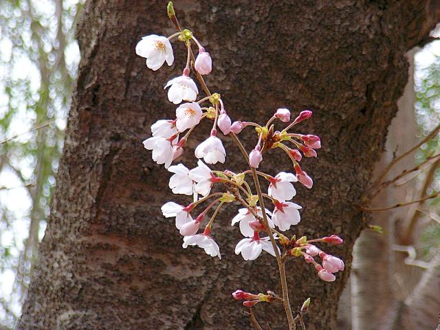 2006-Spring008.jpg